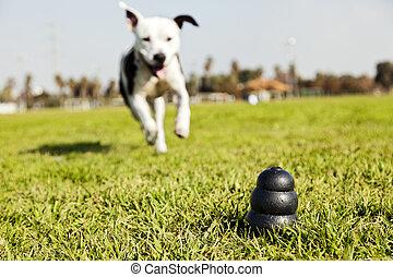 動くこと, へ, 犬, おもちゃ, 上に, 公園, 草, -, モノクローム