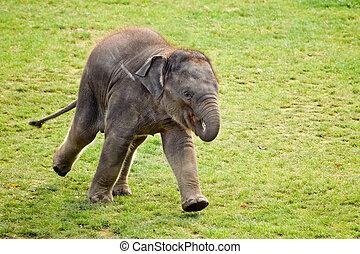 動くこと, 動物園, 子牛, 象