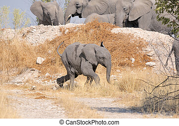 動くこと, 子牛, 象