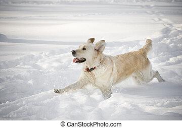 動くこと, 幸せ, 犬, 雪
