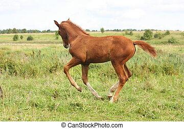 動くこと, 牧草地, 子馬, 若い, 無料で