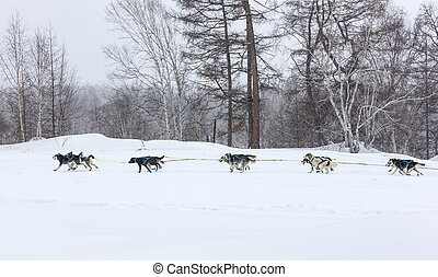 動くこと, 風景, 冬, そり犬