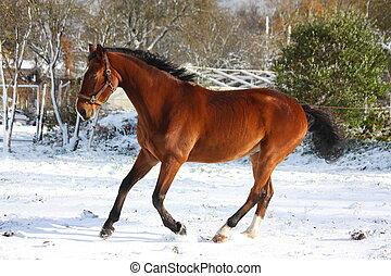 動くこと, 馬, 幸せ, 雪, 湾