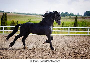 動くこと, 馬, frisian