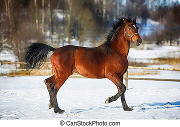 動くこと, browny, 馬