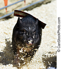 動くこと, litty, 若い, 小豚