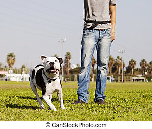 動くこと, pitbull, ∥で∥, 犬, 所有者, ∥において∥, ∥, 公園