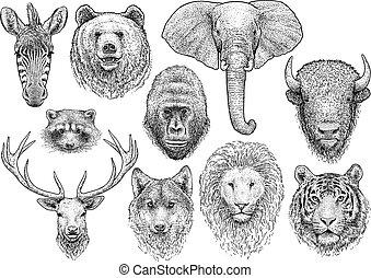 動物の頭, コレクション, イラスト, 図画, 彫版, インク, 線画, ベクトル