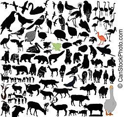 動物, そして, 鳥