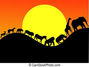 動物, アフリカ, シルエット