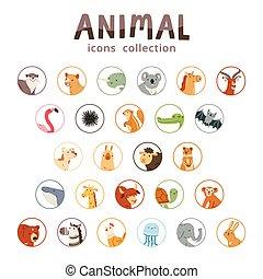 動物, コレクション, アイコン