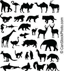 動物, コレクション