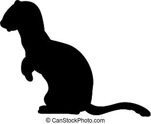 動物, フェレット, テン, イタチ, silhouette., family.