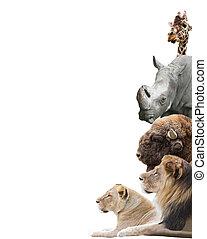 動物, 上, a, 白色 背景, 被隔离