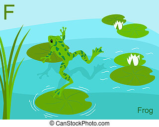 動物, 字母表, f, 為, 青蛙