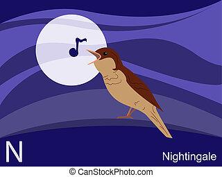 動物, 字母表, n, 為, 夜鶯