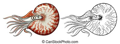 動物, 殻, アウトライン, オウムガイ
