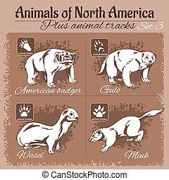 動物, 軌道に沿って進む, アメリカ, footprints., 北, 動物