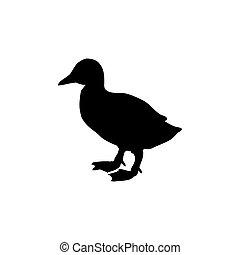動物, 鳥, シルエット, 子ガモ, 黒