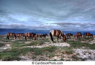動物, mongolian, 群れ