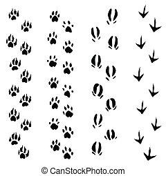 動物, (vector), 道, 隔離された, ステップ, 背景, 白