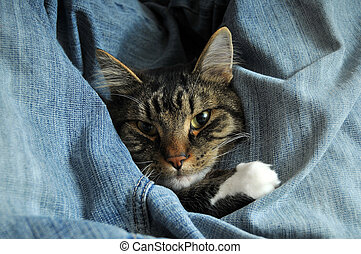 包まれた, キティ, ジーンズ, の上