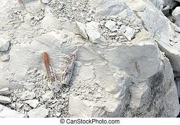 化石, 採石場, 私の, チョーク, rock., belemnite