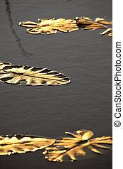 北方, saskatchewan, 离开, 湖, 黄色, 水, 山猫, 百合花
