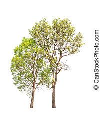 北東, 2, 木, 隔離された, トロピカル, タイ, ほんの少し