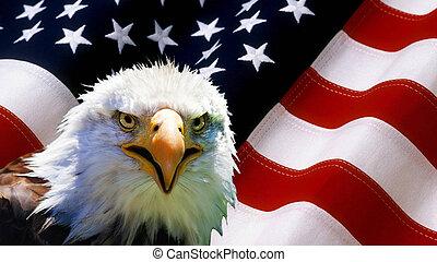 北美洲, 禿的鷹, 上, 美國旗