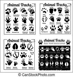 北, -, 軌道に沿って進む, アメリカ人, 動物, 動物
