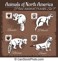 北, footprints., 動物痕跡, 動物, アメリカ