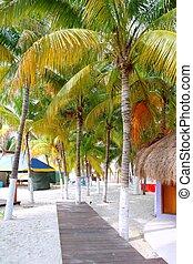 北, mujeres, メキシコ\, 木, トロピカル, やし, isla, 浜