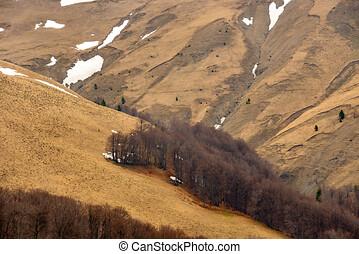 区域, sheep, 木。, 急速, 自然, 集中的, 春, 葉がない, 破壊された, もたらすこと, 山, erosion., 土壌, 早く, 保護される, 牧草, 風景, 山林伐採