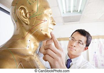 医者, モデル, 人間, 薬, 中国語, acupoint, 教授