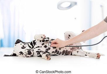 医者, 獣医, 犬, 医院, 聴診器, 検査