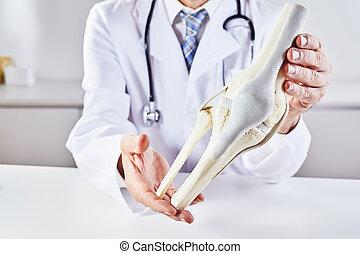 医者, 解剖学, 保有物, 膝, モデル, マレ, 骨