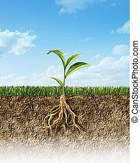 十字路口段, ......的, 土壤, 由于, 草, 以及, a, 綠色的植物, 在中間, 由于, 它, roots.