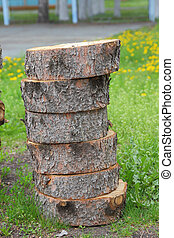 十字路口段, ......的, 樹干, 顯示, 增長圓環
