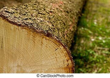 十字路口段, ......的, 樹