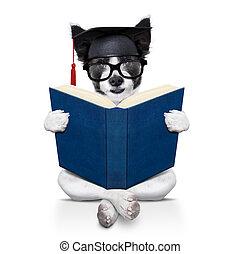 卒業生, 犬