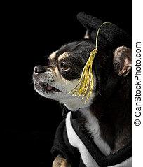 卒業, 犬