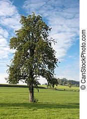 单一, 树, 在中, 风景
