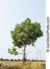 单一, 树
