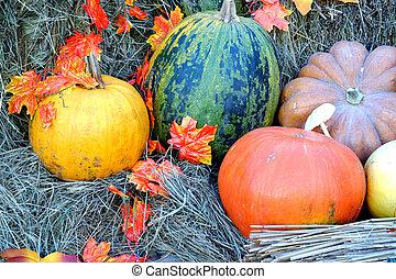 南瓜, 同时,, 秋季树叶, 放置, 在上, 干燥, 干草