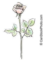 単一, ピンクは 上がった, 花, 隔離された, 上に, ∥, 白い背景, ベクトル, イラスト