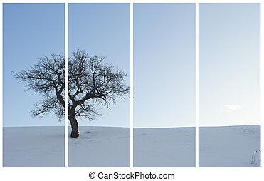 単一, 木, 中に, a, 冬, 景色。, コラージュ, 写真