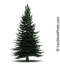 単一, 松の木