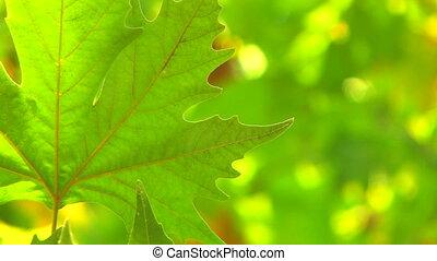 単一, 葉, 新たに, 緑