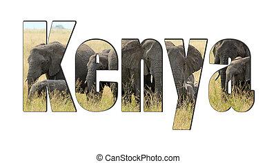 単語, kenya, ∥で∥, a, 群れ, の, アフリカの象, 隔離された, 白